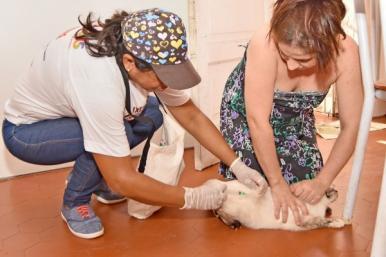 Campanha de vacinação animal prossegue neste fim de semana em mais de 10 bairros da capital