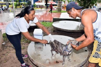 Vacinação contra raiva animal retorna neste fim de semana em São Luís