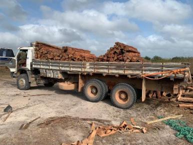 PF deflagra 2ª fase de operação contra extração ilegal de madeira no MA