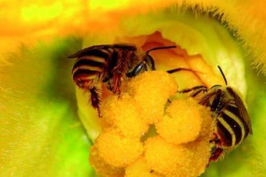 Abelhas devem ser protegidas para garantir futuro dos alimentos