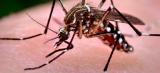 Governo orienta população para o combate ao Aedes