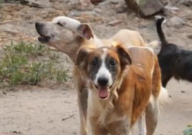 Dia Nacional Adotar Animais: data incentiva a adoação e debates sobre cuidados com os animais