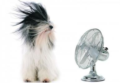 Saiba como amenizar as altas temperaturas do verão para os pets