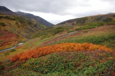 Plantas que crescem no Ártico podem aumentar aquecimento global