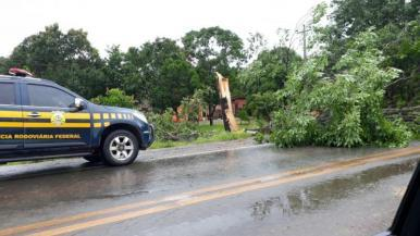 Caminhão colide em árvore e condutor fica gravemente ferido no MA