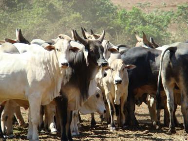 Mais de 60% dos organismos causadores de doenças chegam aos humanos por animais vertebrados